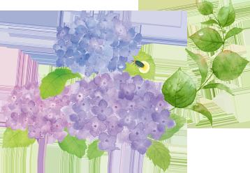 背景繡球花